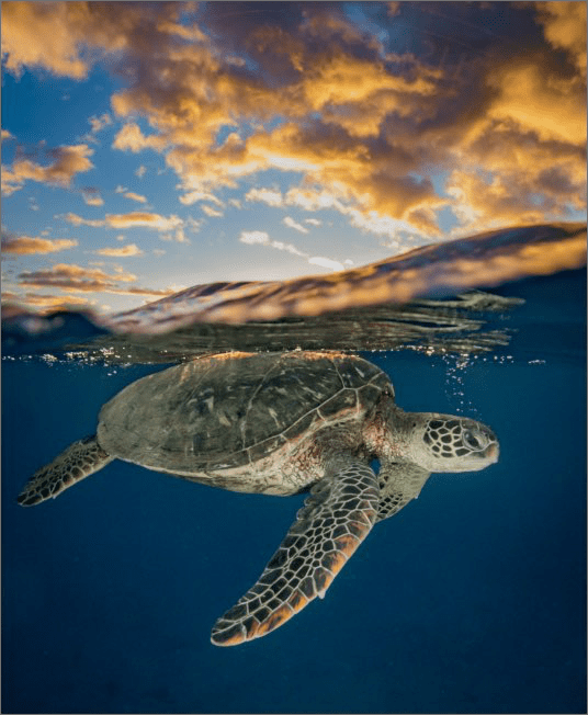Turtle swimming beneath surface with sky above